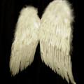 ico_angels